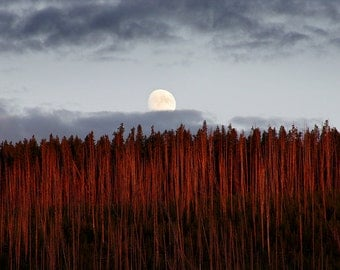 Moon over Yellowstone National Park, Landscape Photograph