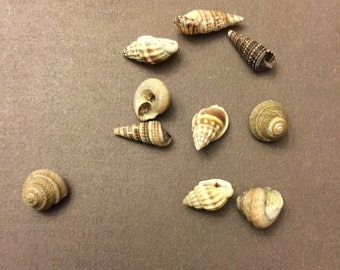 Beach Seashells 25 Tiny Shells Home Decor Craft Supply