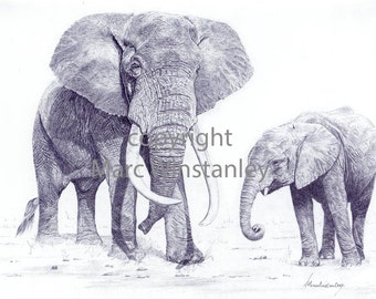 Elephant and calf print from an original pencil drawing by Marc Winstanley