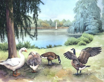Roath Park Lake print | Watercolour painting of Geese | Welsh landscape | Cardiff scene | Geese, water, willows | Artwork by Helen Lush