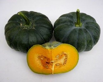 Jamaican Pumpkin Seeds,Pumpkin (Jade Prince),West Indian, Haitian Pumpkin