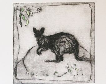 original wallaby etching SWAMP WALLABY 2 drypoint etching by Wendy McDonald