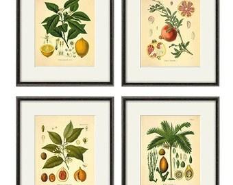 Fruit Wall Decor fruit wall decor | etsy