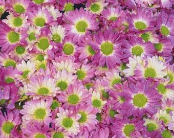 Pink Daisies PDF Cross Stitch Pattern
