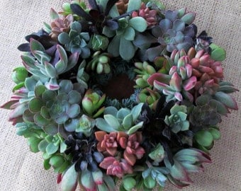 Succulent Wreath 12 inch in Gorgeous Colors