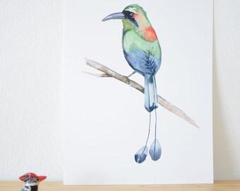 Motmot. Bird Illustration. Tropical Bird. Watercolor Art Print.