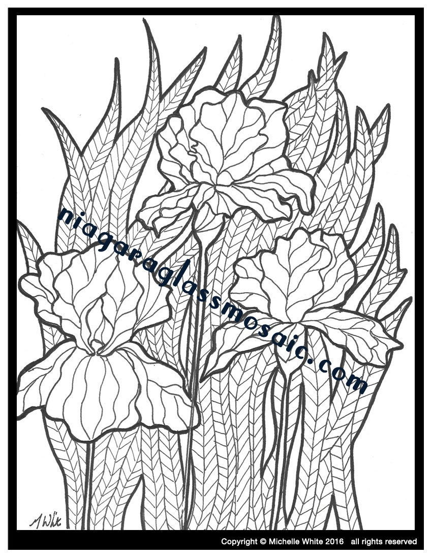 Iris coloring page adult coloring handmade flower color for Iris flower coloring page