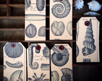 A collection of shells gift tags...