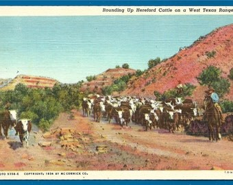 Linen Postcard - Rounding Up the Hereford Cattle on a West Texas Ranch for a Cattle Drive (2026)