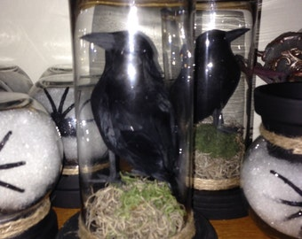Raven under glass