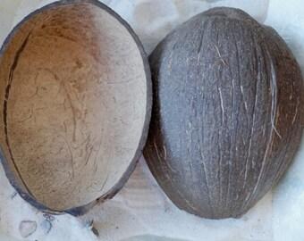 Natural Coconut Cup, Natural Coconut Shells, Coconut Cups, Real Coconut, Coconut Shell
