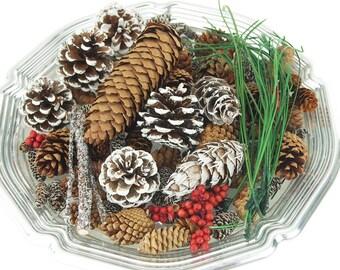 Winter Pine Botanical Blend Blend Fragrance Potpourri, 6 oz