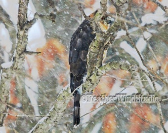 Coopers Hawk Fine Art Raptor Photography | Snowing Pic | Accipiter cooperii | Surreal Raptor in Snow Storm Pic | Abstract Bird of Prey Print