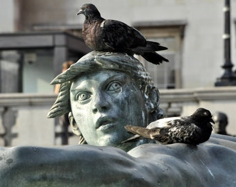 Funny Art Print. Travel Photography. Trafalgar Square. London Print. London Art. London Photo. Pigeon. Pigeon Photo.