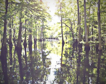 Swamps of Florida