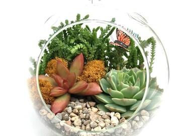 Succulent Home Decor-Succulent Terrarium Kit-6 inch Terrarium-Succulent Arrangement-Hostess Gift-Butterfly Decor-Teacher Gift-Gardener Gift