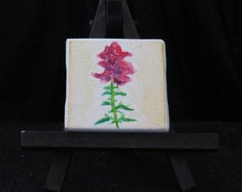 SnapDragon Mini Canvas