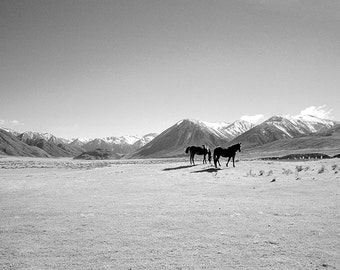 Fine Art Photography print, Horse Art, Black and White, New Zealand, Nature Photography, Landscape Photography, Wall Art Print
