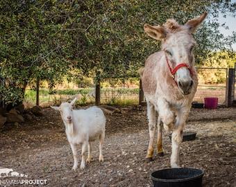 Mr. G Goat & Jellybean Donkey, Farm Animal Rescue Portrait Photography