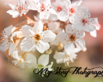 White Flowers, Nature Photography