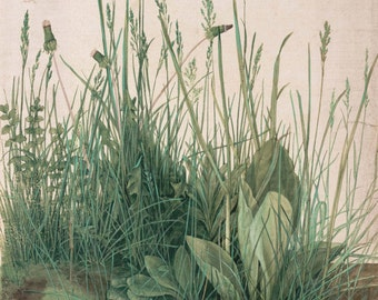 Albrecht Durer: The Large Turf. Fine Art Print/Poster. (001912)
