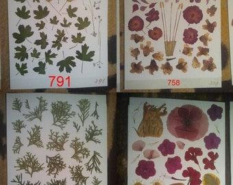 Pressed Flowers,natural crafts, leaves, herbal,natur , rustic,montessori crafts #791, #758, #801, #503