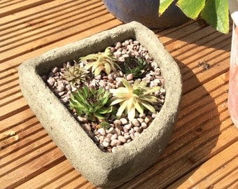 Corner trough stone garden planter supervivum alpine succulents