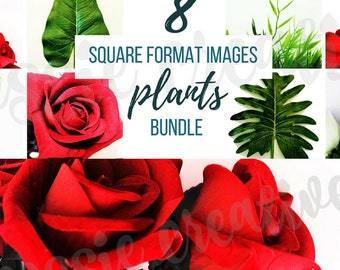 Plants Bundle Design Stock Photography Digital Background Image