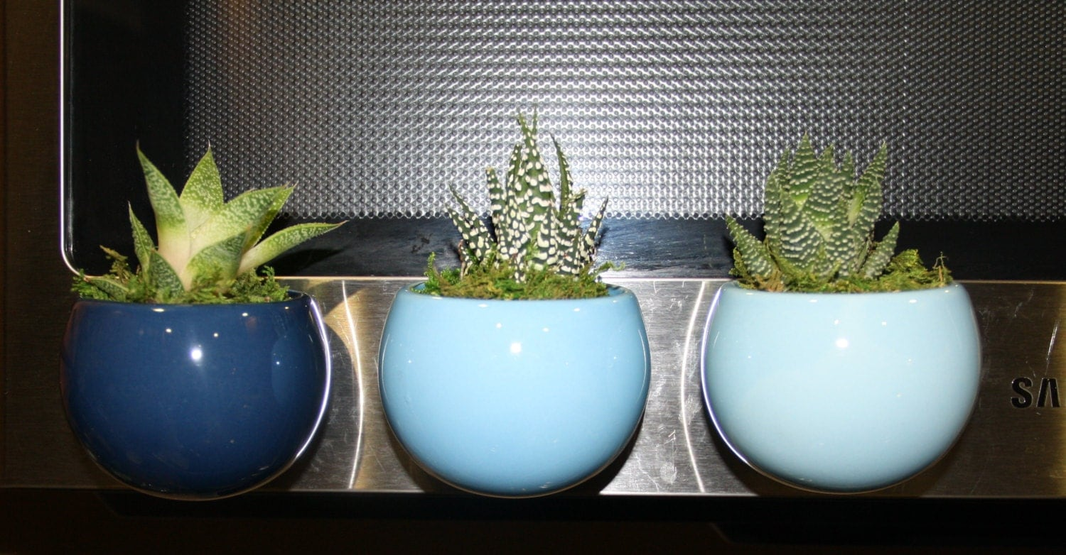 Set Of 3 Magnetic Ceramic Succulent Planters Different