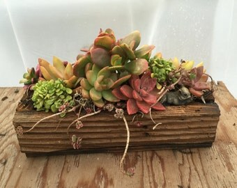 Succulent arrangement - the gift that gives for years to come. Great floral gift for Mother's Day. Barn wood window box. Lampwork heart