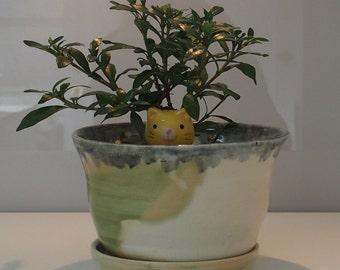 Plant pot and saucer set