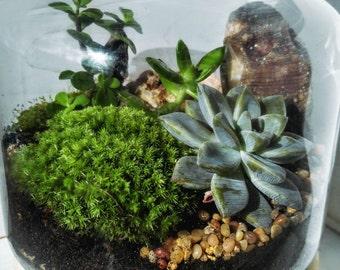 DIY Large glass and wood terrarium kit
