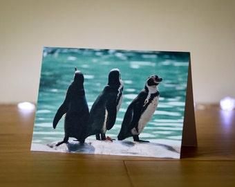 Photo Note Card, Humboldt Penguins, Wildlife Photography, Animal Print, Blank Greetings Card