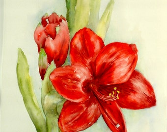 """ORIGINAL Watercolor Floral Art-Red Amaryllis Blossom and Buds-Medium 11""""x15"""" Painting with White/Green 16""""x20"""" Mat"""
