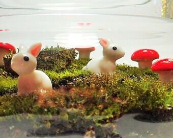 Moss Terrarium - Bunnies in Headlights - Sydney only