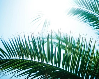 Palm leaves in the sunlight image