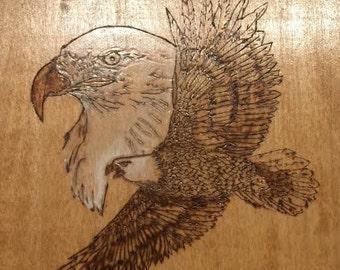American Bald Eagle with Profile