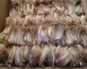 Raw unprocessed Merino Fleece Wool Locks  100g for spinning, felting and crafts