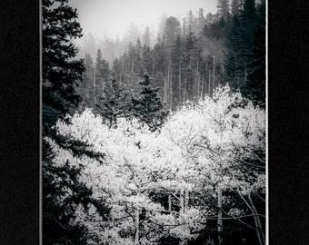Black and White photo Nature