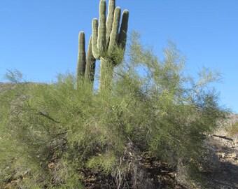 Desert Cactus Skyline