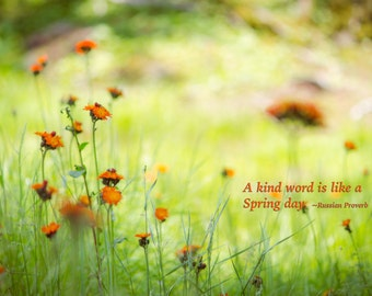 Flower, Field, Wild Flower, Inspiration, Kindness - Original Photograph # 6603