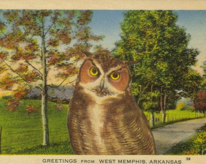 Retro Owl Art, Vintage Arkansas Postcard, Woodland Artwork
