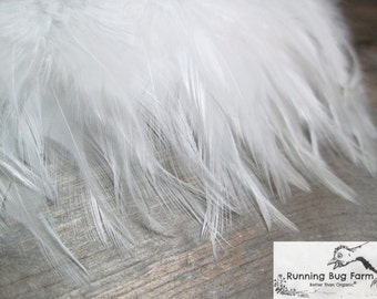 White Feather White Saddle Feather Real Bird Feather Natural Feather Assortment White Wyandotte Rooster Feather For Craft 20 @ 3 - 3.5 / WW9