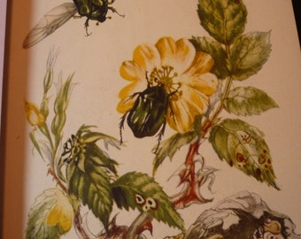 Vintage - Beetles and Flowers - detailed prints - Natural world framable - 2 sided color lithograph -