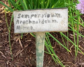 Garden Marker c1930s  Upstate New York Vintage Plant Marker  Semper Vivum Arachnoideum