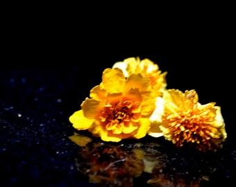 Marigold - Dried Flower - Yellow Marigold - Orange Marigold - Day of the Dead - Dia de los Muertos