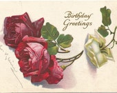 Ruby Red Roses and White Rose on Birthday Greeting Artist Signed C. Klein Vintage Postcard