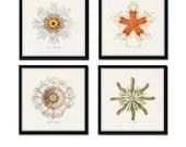 Ernst Haeckel Print Set, Square Prints, Canvas Art, Wall Art, Prints and Posters, Coastal Art, Nautical Art, Illustration, Ernst Haeckel