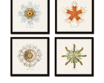 Ernst Haeckel Print Set, Square Prints, Giclee, Art Print, Wall Art, Coastal Art, Nautical Art, Illustration, Ernst Haeckel, Collage
