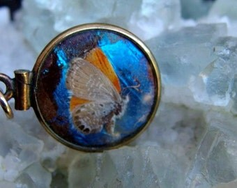 Victorian Era Gold Filled Butterfly Wing Art, Double Sided with Tiny Moth Mounted on Blue Morpho Wing Under Glass, Luminous Wing on Reverse